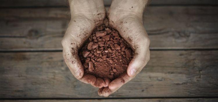 COCOA COULD HELP PREVENT COLON CANCER