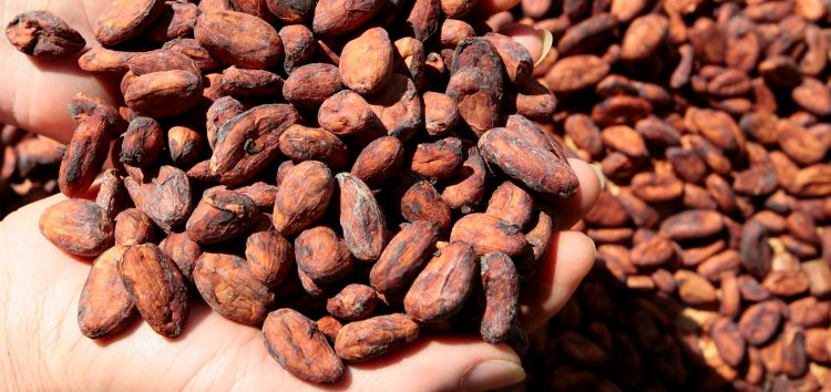 STUDY ADDS TO DATA DEMONSTRATING BENEFITS OF BIOACTIVE COMPOUNDS IN COCOA