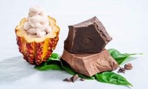 NEW WHOLEFRUIT CHOCOLATE CUTS WASTE BY USING ENTIRE CACAO FRUIT