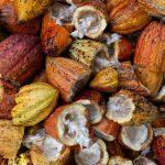 BARRY CALLEBAUT ANNOUNCES 'WHOLEFRUIT' CHOCOLATE