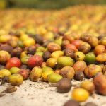 ARABICA PRICES ROSE IN MARCH WHILE ROBUSTA FELL-ACCORDING TO ICO