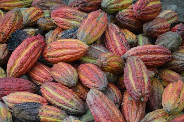 8 HEALTHY REASONS TO EAT MORE CACAO