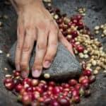 LOS AGRICULTORES DEL CAFÉ EN KENIA AUMENTAN EL PROCESO EN LA GRANJA