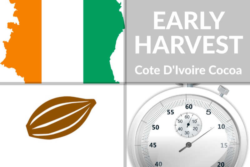 CÔTE D'IVOIRE'S MAIN COCOA HARVEST TO START EARLY