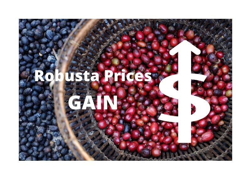 ROBUSTA COFFEE PRICES MOST SIGNIFICANT MONTHLY GAIN IN A DECADE