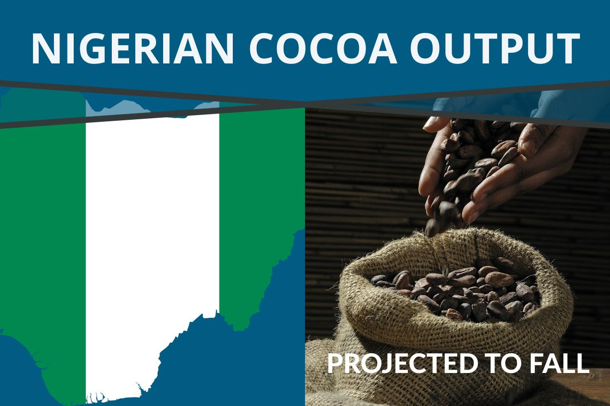 NIGERIAN COCOA OUTPUT PROJECTED TO FALL FOR 2020/21