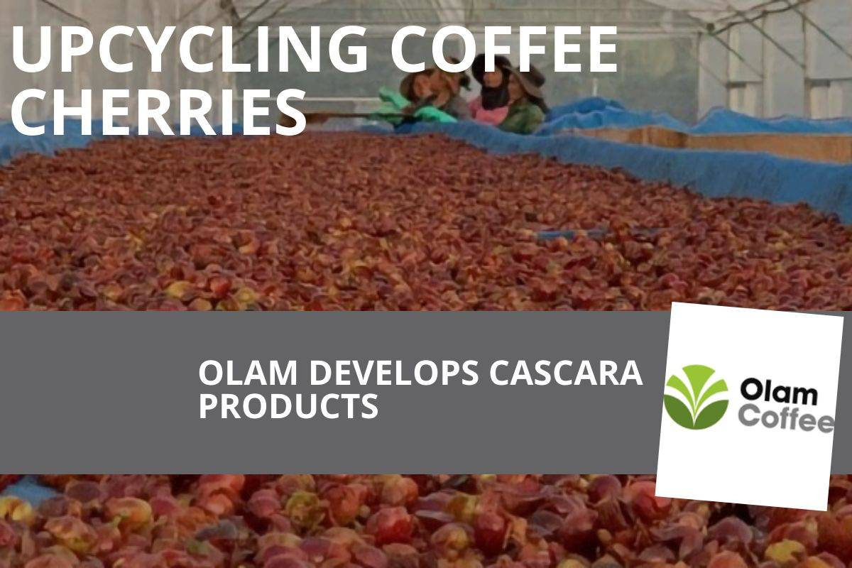 OLAM CREATING CASCARA PRODUCTS