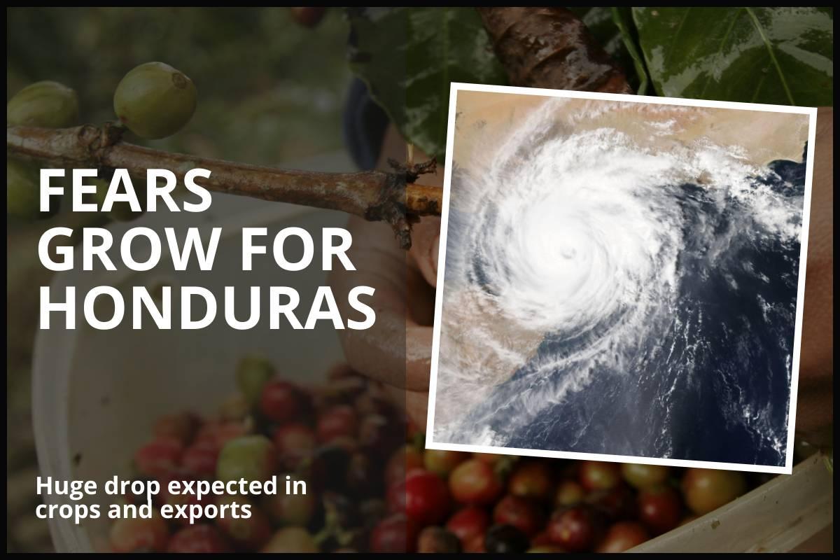 FEARS GROW FOR HONDURAS COFFEE