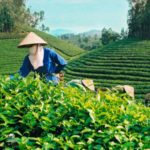 VIETNAM'S COFFEE EXPORTS EXPECTS A GOOD START IN 2021