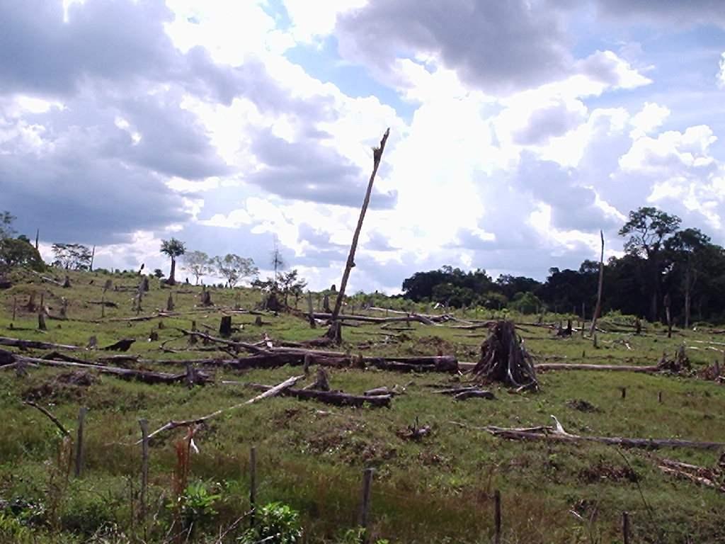 CARGILL SEE PROGRESS IN FIGHTING DEFORESTATION