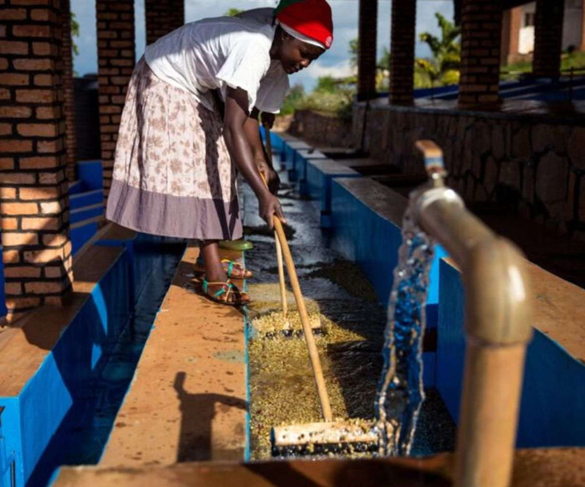 STARBUCKS AIMS TO CONSERVE WATER USAGE IN GREEN COFFEE PROCESSING