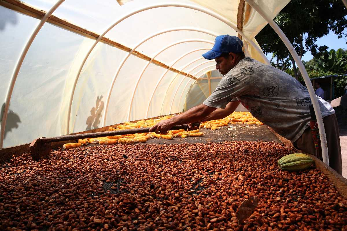 MONDELĒZ AND OLAM FOODS JOIN FORCES TO CREATE LARGEST SUSTAINABLE COCOA FARM