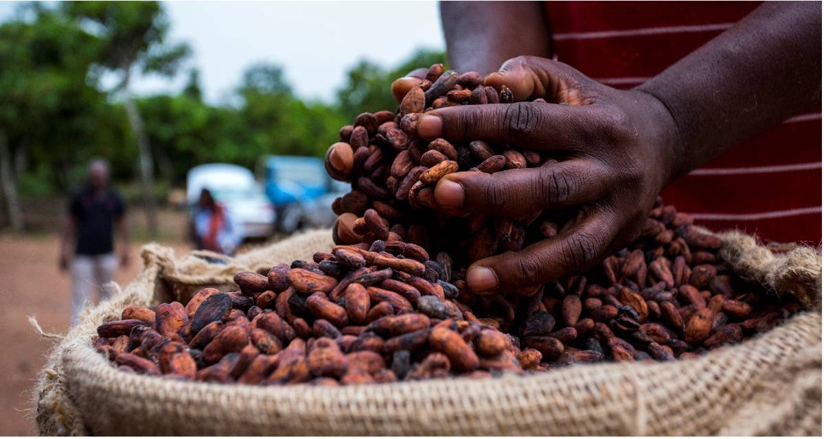 MOCA DEMONSTRATES THE VALUE OF CACAO FLAVOUR