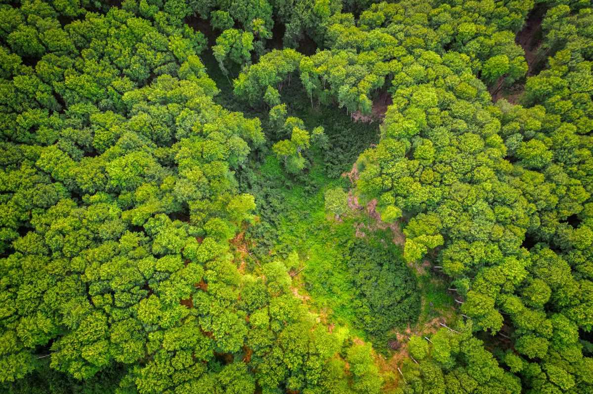 NESTLÉ ADDS SUPPORT FOR EU DEFORESTATION PLAN