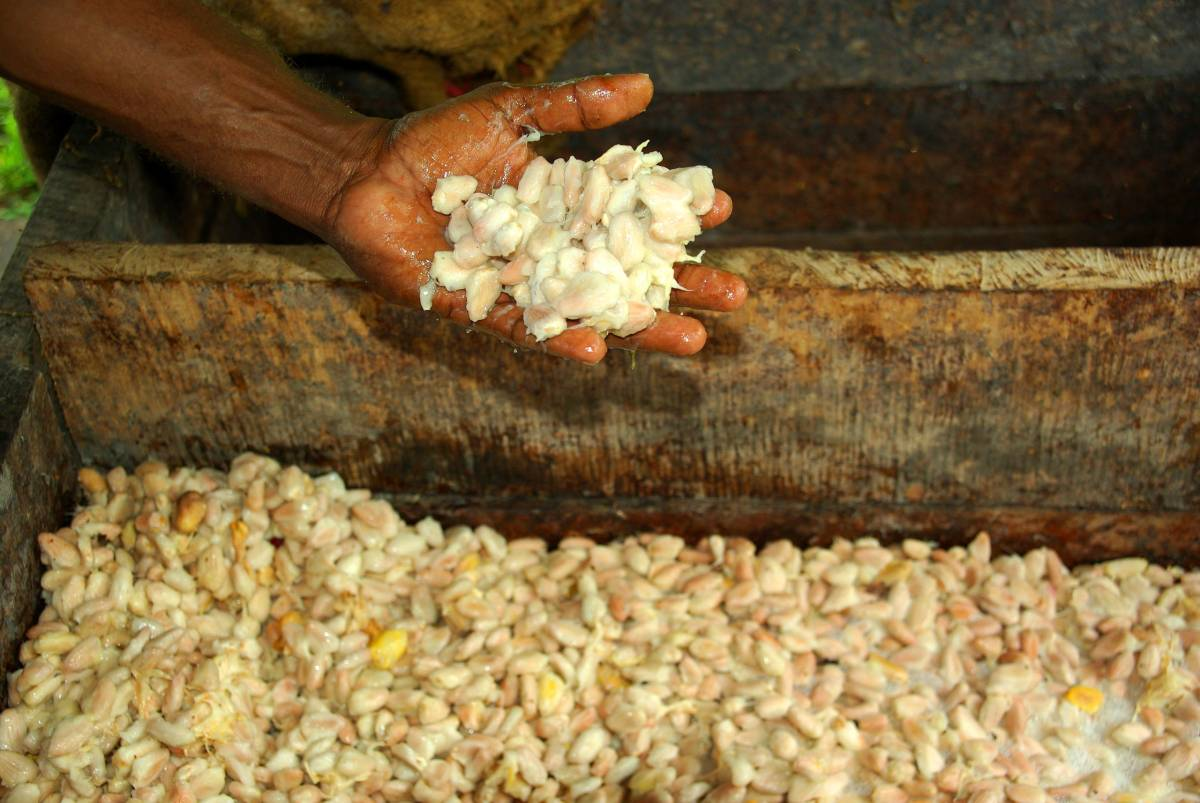 CÔTE D'IVOIRE TAKES STEPS TO GET BIGGER PART OF VALUE CHAIN