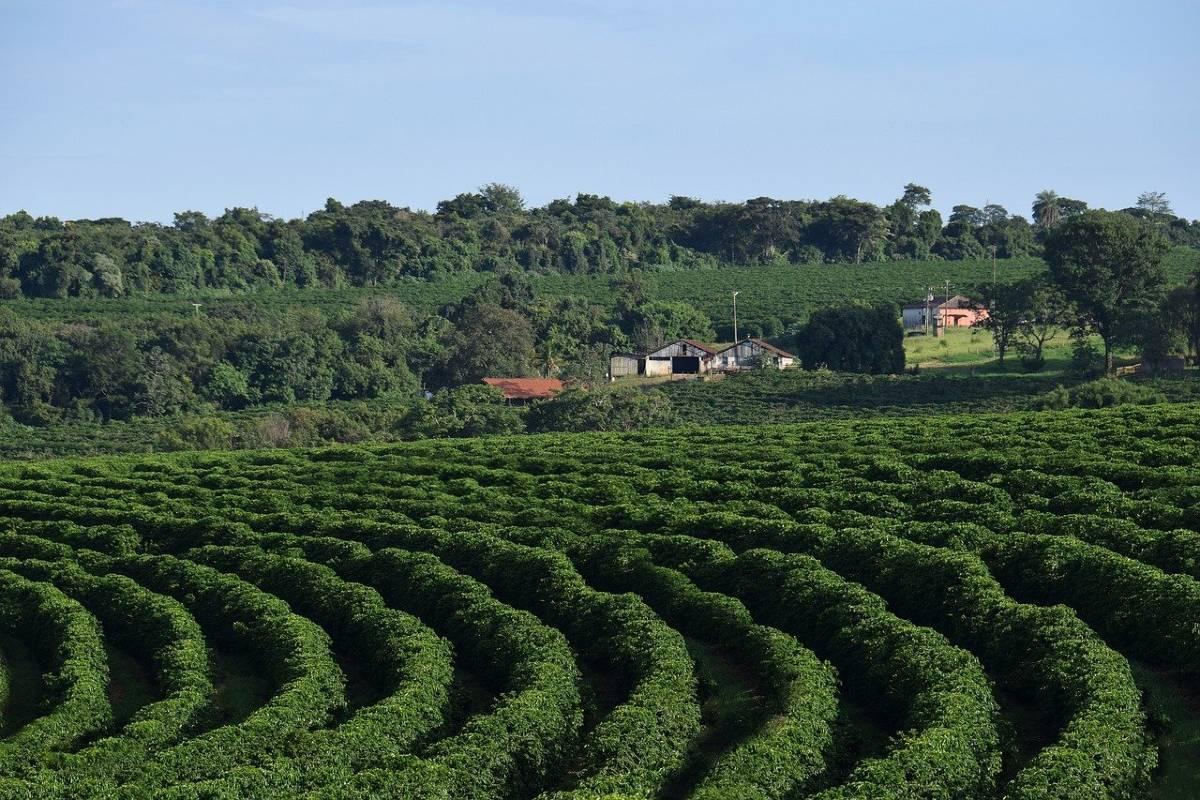 BRAZIL FARMERS RENEGOTIATE PRE-SOLD CONTRACTS FOR MORE CASH