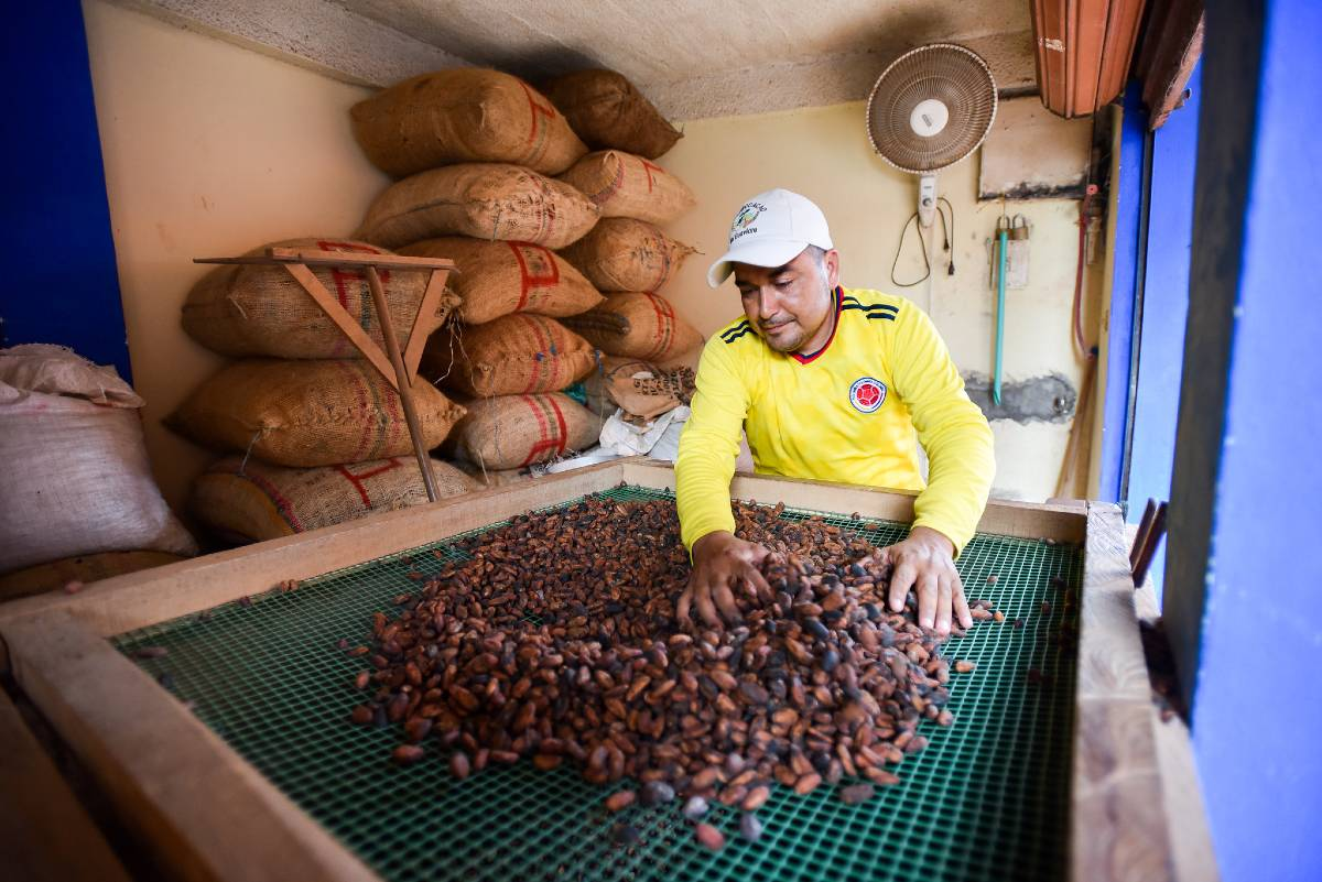USING SCIENCE TO ANALYSE THE SMELL OF COCOA