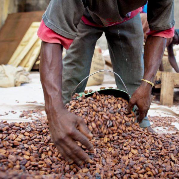 LES PLUIES RETOURNENT EN CÔTE D'IVOIRE ALORS QUE LES MEULEUSES ONT DES CONTRAINTES DE PUISSANCE