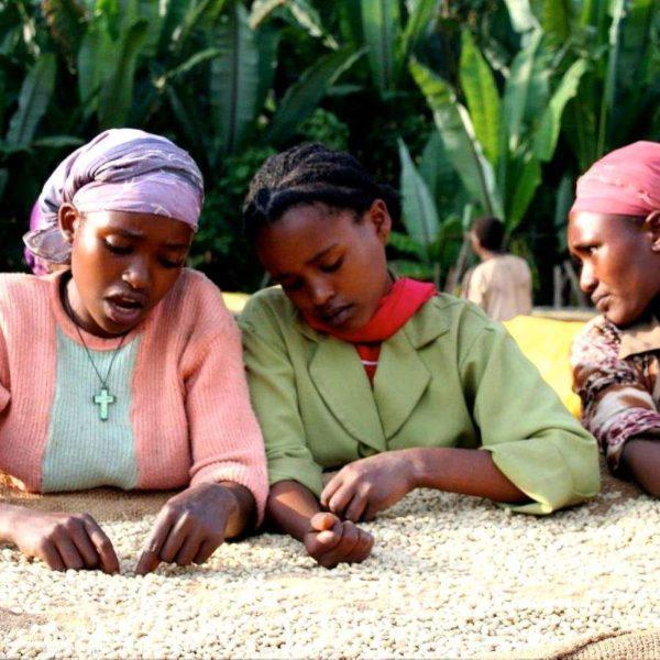 EMPOWERING ETHIOPIAN WOMEN IN COFFEE