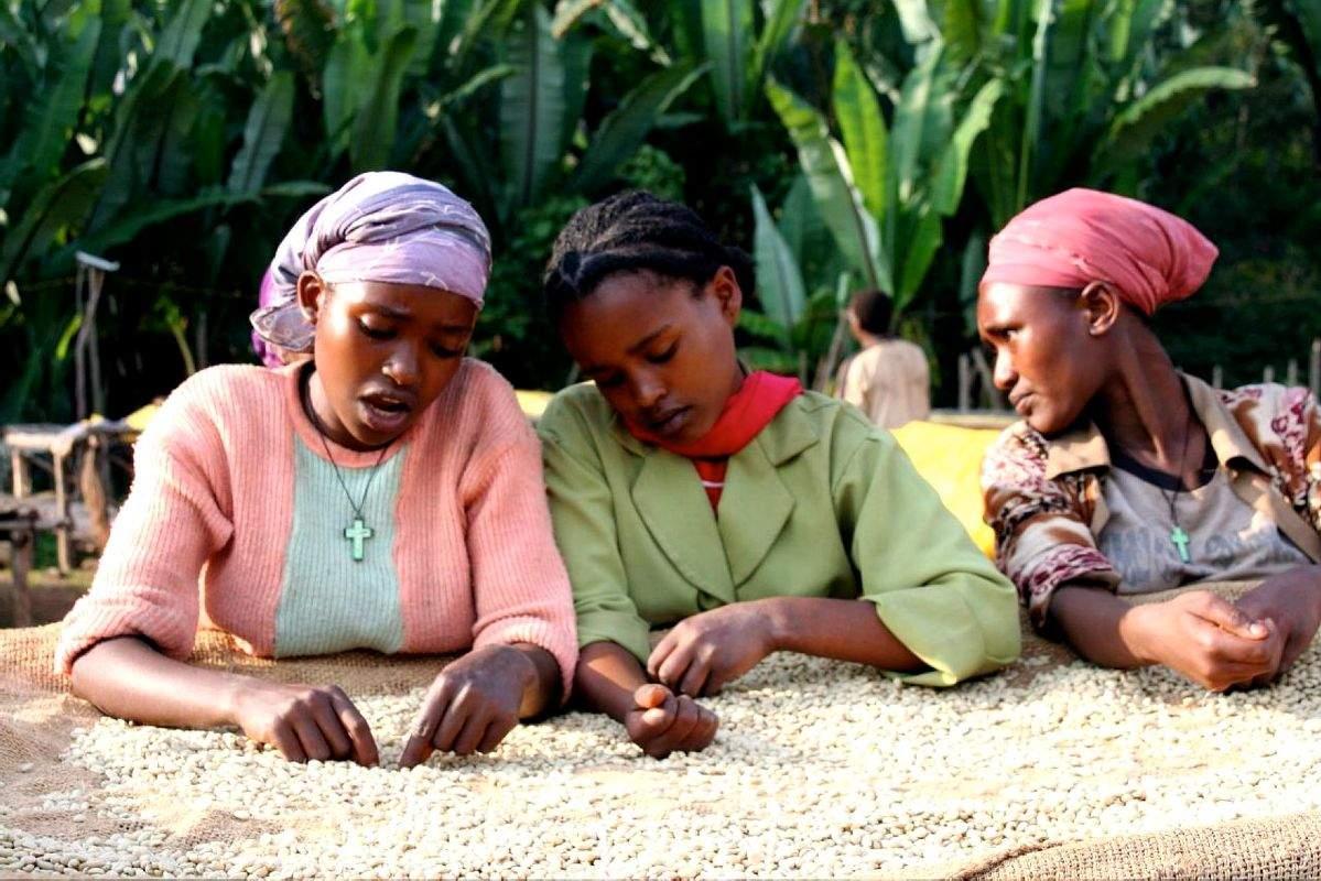 AUTONOMISER LES FEMMES ETHIOPIENNES DANS LE CAFÉ