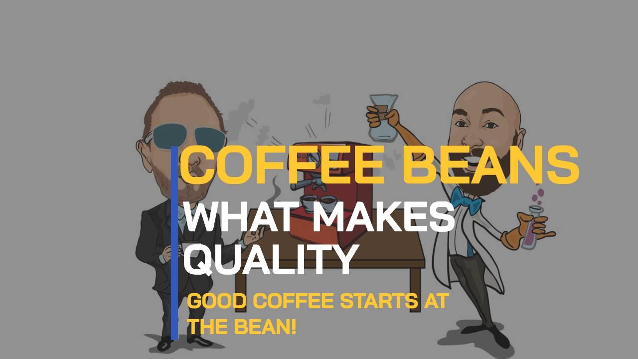 BEAN TALK – QU'EST-CE QUE LA QUALITÉ DES GRAINS DE CAFÉ? LES MYSTÈRES DU HARICOT RÉVÉLÉS.
