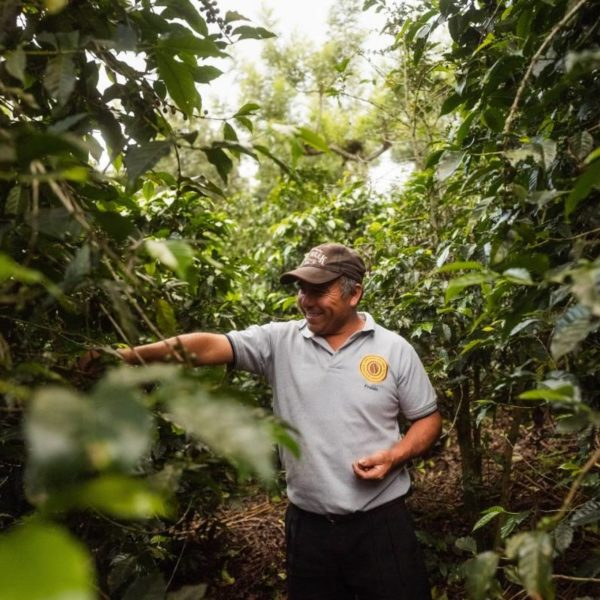 STUDY LINKS COVID WITH DANGER OF RESURGENCE IN COFFEE DISEASE