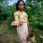 AUSTRALIA PARTNERS TO PROMOTE TIMOR-LESTE COFFEE FARMERS