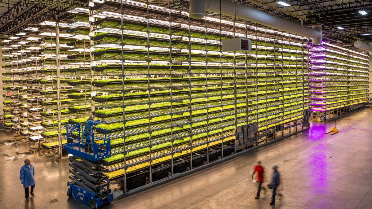 CARGILL AND AEROFARMS PARTNER TO RESEARCH VERTICLE COCOA FARMING