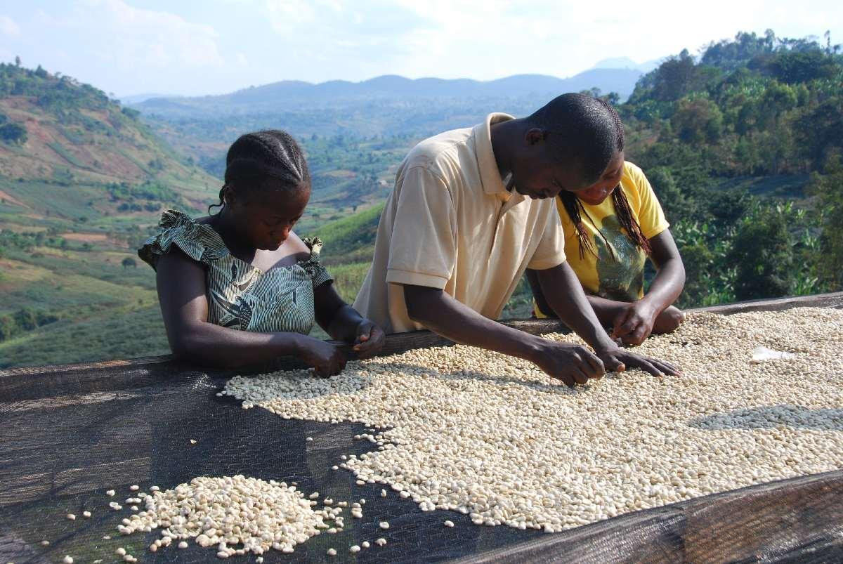 WESTROCK COFFEE PASSAGE À L'APPROVISIONNEMENT RESPONSABLE 100% D'ICI 2025